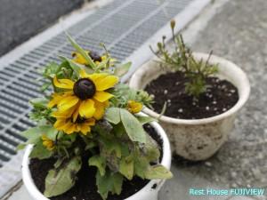 鉢植え_1260843